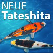 Jetzt neu im Verkauf: Tosai Tateshita